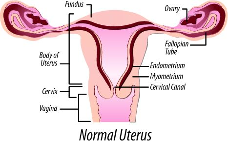 National Uterine Fibroids Foundation